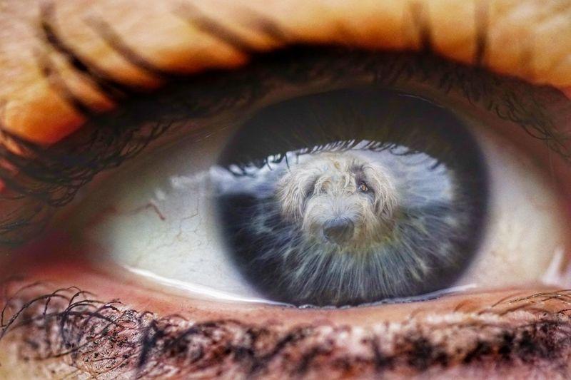 Human Eye Eyelash Eyesight Human Body Part Iris - Eye Backgrounds Only Women Double Exposure Irish Wolfhound Dog Eye Soulful Eyes Looking At Camera