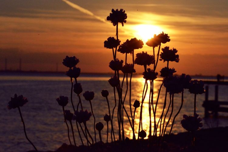 Silhouette plants by sea against romantic sky at sunset