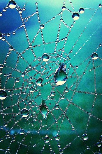 making a web :)