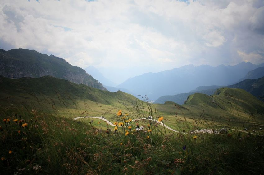 Passo Giau Mountain Environmental Conservation Agriculture Valley Plant Nature Landscape Tree Mountain Range Terraced Field Vacations Beauty Summer Beauty In Nature Road Mountain Road Bends Flowers