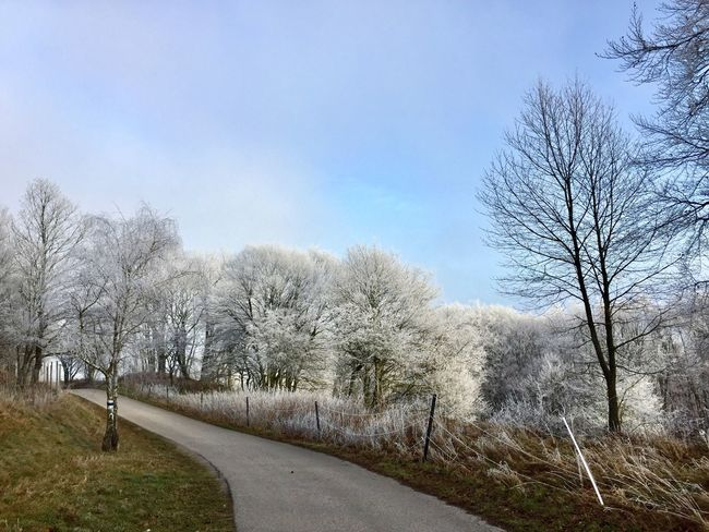Frozen 🙌 Wienerwald  Frozen Frozen Nature Trees And Sky Trees Bare Trees Nature Day Outdoors Sky No People Beauty In Nature Road Tranquility Scenics