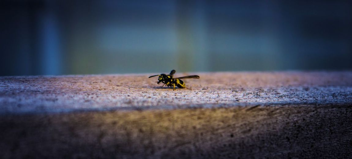 High angle view of wasp on retaining wall