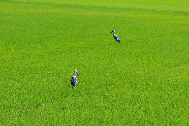 Birds perching on grassy field