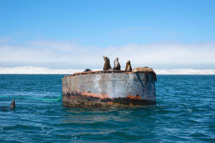 Seals On Blue Sea Against Sky
