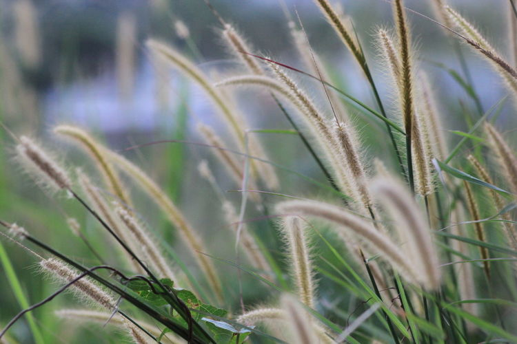 Plant Green Color Outdoors Street Flowers Nature Growth Agriculture Cereal Plant Close-up Land Field Crop  Selective Focus Landscape Grass No People Day Beauty In Nature Rural Scene Farm Tranquility Wheat Blade Of Grass