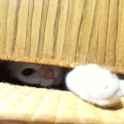 Cat Pet チロ