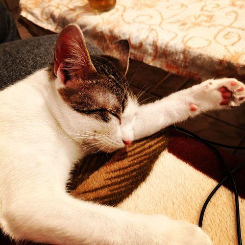 #sundaymood Pets One Animal Domestic Animals Domestic Cat Animal Themes Mammal Feline