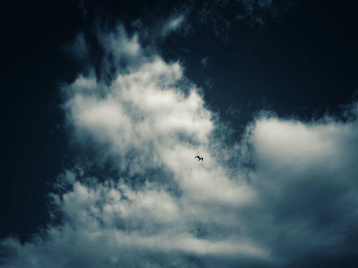 Sky Sky Blue Blue Sky Seagull Birds Summertime