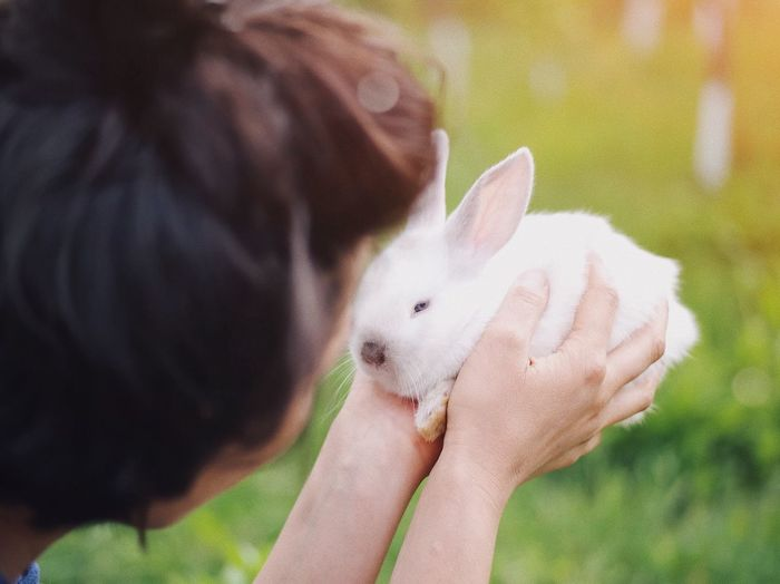 Environment Grass Cute Animals Cute Cute Pets Love Fluffy Nature Hairstyle Easter Bunny Easter Countryside Furry Fur Bunny  Rabbit - Animal One Person Hand Real People Human Hand One Animal Mammal Vertebrate Domestic Domestic Animals Women Pets Leisure Activity Holding Finger