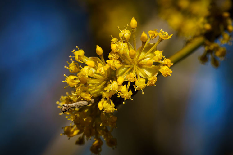 EyeEm Best Shots EyeEm Nature Lover EyeEm Gallery Beauty In Nature Blue Close-up Day Flower Flower Head Flowering Plant Focus On Foreground Fragility Freshness Growth Nature No People Outdoors Plant Pollen Selective Focus Yellow