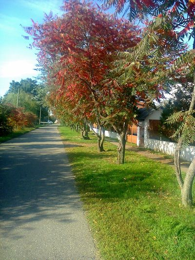 autumn street Beauty In Nature Day Grass Growth Nature No People Outdoors Sky The Way Forward Tree