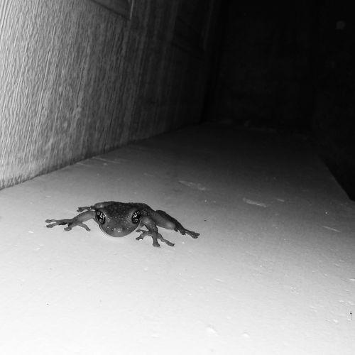 Las ranas que vigilan los edificios de Clayton.