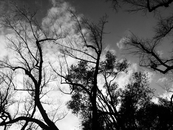 Blackandwhite Photography Blackandwhite Black And White Nature Trees Beautiful Branch Cloud_collection  Sky_collection Dramatic Sky Tree No People Minimalism Day Outdoors Cloud - Sky Black & White Cloud_collection  Freshness Sky Cloud_collection  Cloud_collection  Monotone SpaceDramatic sky Beauty In Nature Simplicity banhel high contrast ssshigg high contrast