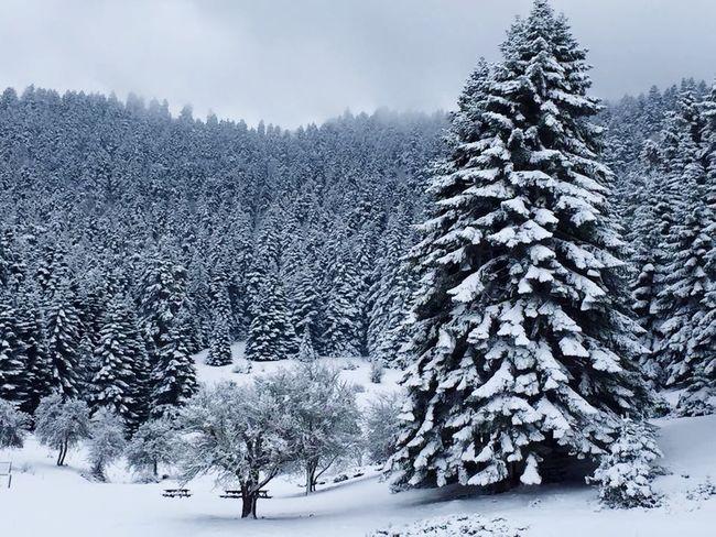 Bolu Abant Kar Kış Guzellik Mutlu  Happy Melda