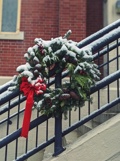 Flower plants growing by railing against building during winter