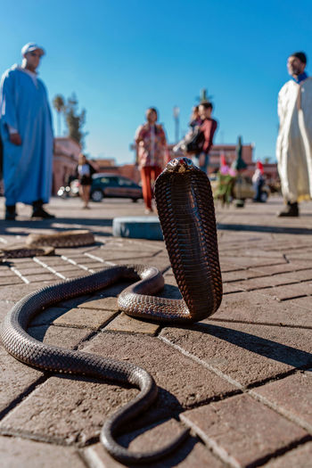 Marrakesh Marrakech Morroco Nature Close-up Group Of People Full Length Sunlight Outdoors Souk Tourist Destination Tourist Trap Snake Naja
