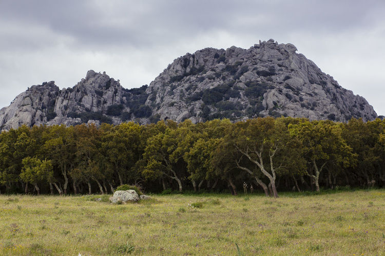 Trees On Grassy Field Against Rocky Mountains At Sardegna