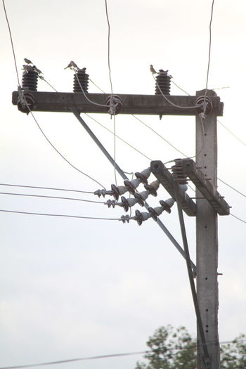 Poles and power lines Poles And Power Lines Animal Themes Animals In The Wild Bird Cable Connection Day Electricity  Electricity Pylon Fuel And Power Generation Hanging Low Angle View Nature No People Outdoors Perching Power Line  Power Supply Sky Technology