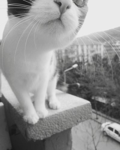 Cats 🐱 Cat Animal Nature Astronomy Rear View Factory Ahşapev Blackandwhite Mature Adult Beauty In Nature Lake Walking Landscape Night Fragility Only Men No People Welder Animals In The Wild Tranquility Men Steel Worker Outdoors Water