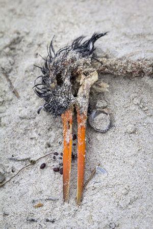 Tote Vögel am Strand von Langeoog. Animal Themes Austernfischer Beach Bird Bird Photography Close-up Dead Dead Animal Death Federn Insel Insel Langeoog Island Langeoog Nature Outdoors Oystercatcher Seagull Sterben Winter