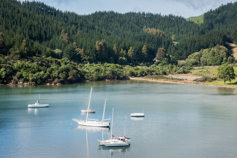 Picton,Marlborough/New Zealand-December 13,2016: Stunning, lush mountain landscape with nautical vessels anchored in the harbour under a blue sky with clouds in Picton, New Zealand Harbour Inlet Transportation Traveling Anchored Bay Beauty In Nature Boat Idyllic Marlborough Sounds Mode Of Transportation Mountain Nature Nautical Vessel New Zealand Picton  Sailboat Sailboats Scenics - Nature Sea Sky Travel Destinations Tree Water Waterfront
