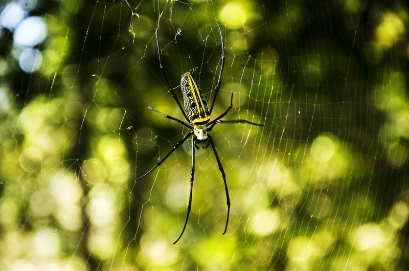 #Spider #insect #closeup #wildlife Web Spider Web Spider Insect Complexity Trapped Close-up Animal Themes Animal Leg
