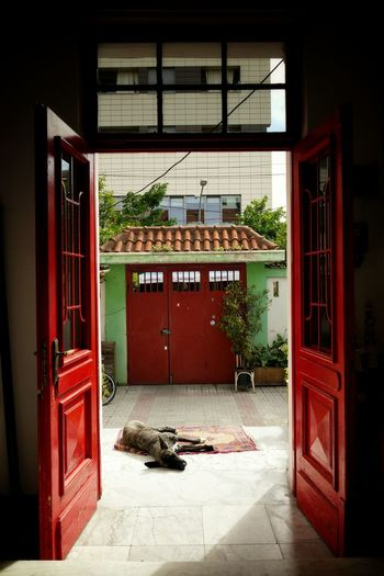 Dog relaxing at doorway