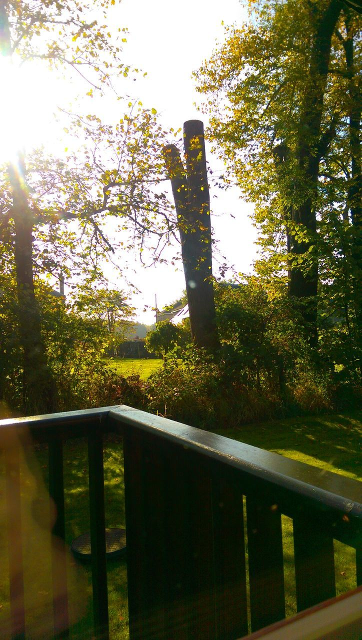 tree, railing, nature, growth, no people, day, tranquility, sunlight, outdoors, forest, beauty in nature, sky, close-up