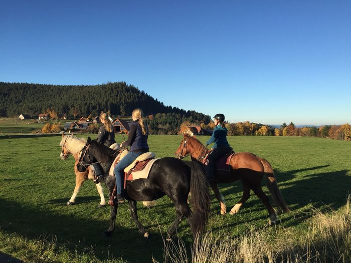 Horse Riding in Sulzbach Sulzbach Horses Horse Riding Schwarzwald Black Forest Autumn Reiteralm Baden-Württemberg  Germany Wandering