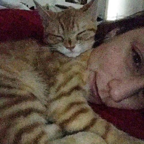 My Student Life Ican'tgotoschool Cats Cat Lovers Cats Of EyeEm Love Hapiness