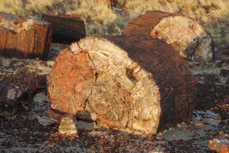 Close-up of log on rock