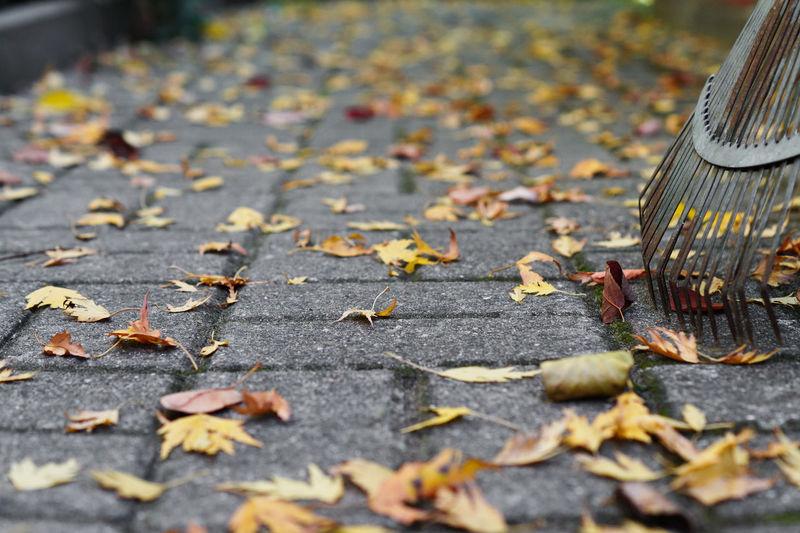Autumn Leaves On Street