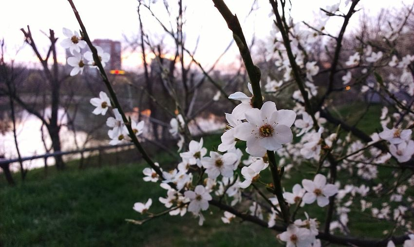 Spring is coming Spring Spring Flowers Flowers Nature Spring In The City Lake View Enjoying The View City View