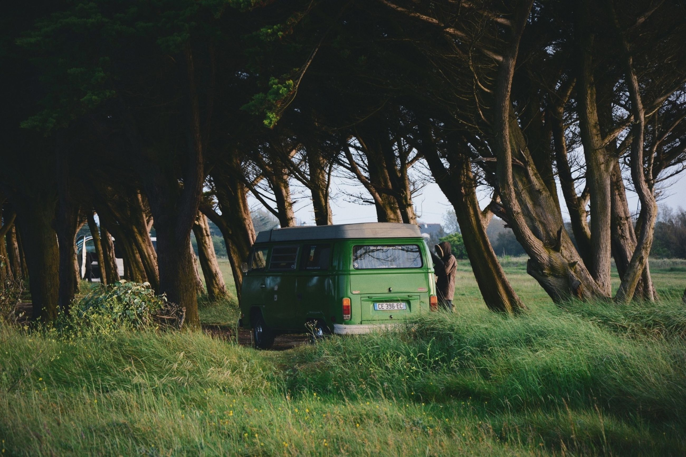 tree, grass, transportation, land vehicle, mode of transport, car, field, growth, green color, nature, tree trunk, grassy, outdoors, sunlight, tranquility, day, travel, landscape, no people, plant