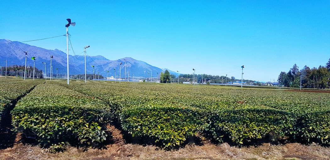 The green tea farm Green Tea Farm Mie Prefecture Japan Clear Sky Agriculture Rural Scene Water Mountain Sky