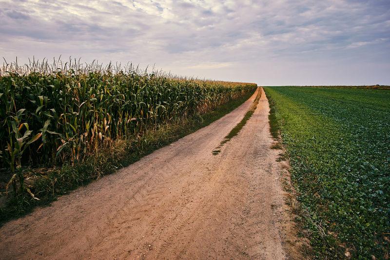 Rural scene of