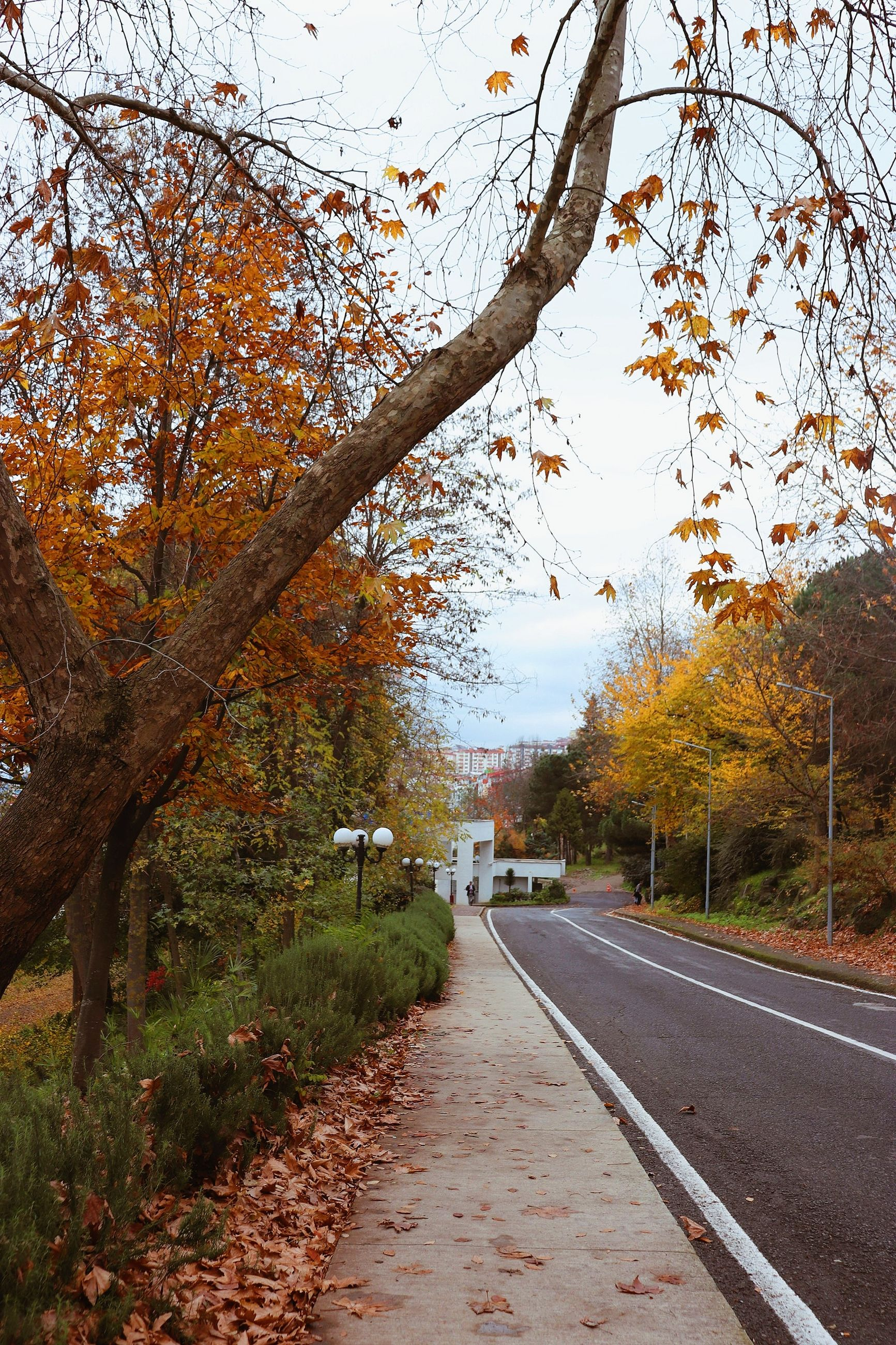 tree, autumn, plant, change, the way forward, direction, nature, transportation, no people, beauty in nature, growth, branch, road, day, plant part, leaf, orange color, diminishing perspective, outdoors, sky, autumn collection, fall