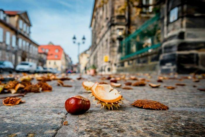 City Street Close-up No People Outdoors Chestnut Bayreuth City Bayreuth. Germany Oberfranken Bavaria