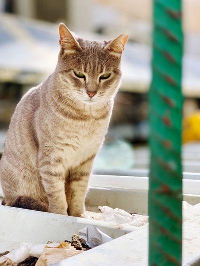 One Animal Mammal Cat Feline Pets Domestic Domestic Animals