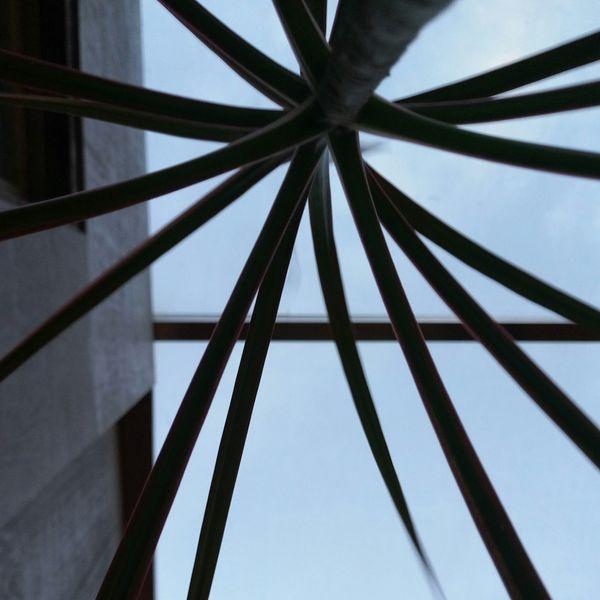 Metal Hand Coffeetime Plants Plants 🌱 Plant Part Plant Lover Interior Views