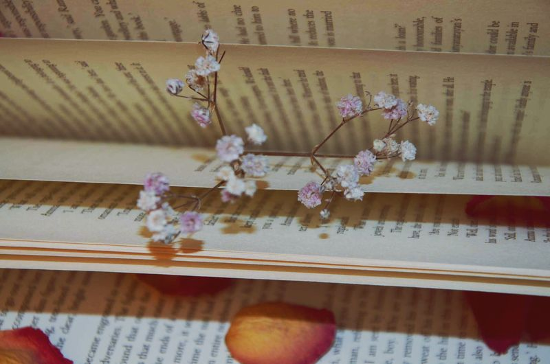 Bookslover Leafrose Pages Of A Book Romantic Mood Indoors  Close-up No People Flower Fragility Day Nature