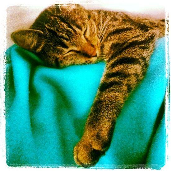 Cimbom Sleepingcat