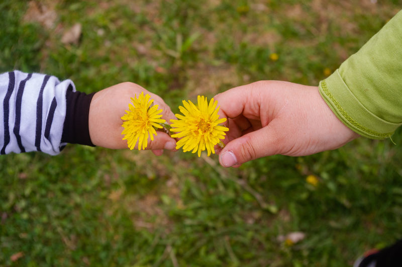 Close-up of hand holding yellow flowers on field