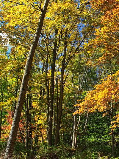 Forest Hardwood