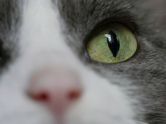 Animal Head  Animals Cat Cat Eyes Feline Full Frame Macro Mammal No People Perspective Pet Reflection Selective Focus Domestic Animals From My Point Of View Close-up Extreme Close-up Detail Animal Themes Taking Photos Close Up