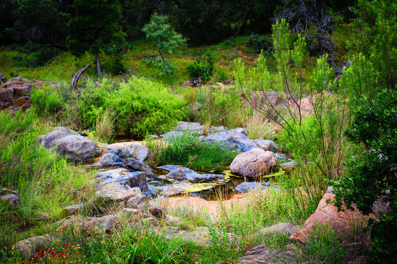 plant, growth, forest, beauty in nature, tranquility, land, nature, grass, no people, tree, green color, tranquil scene, scenics - nature, water, rock, day, lush foliage, foliage, solid, outdoors, flowing water, flowing