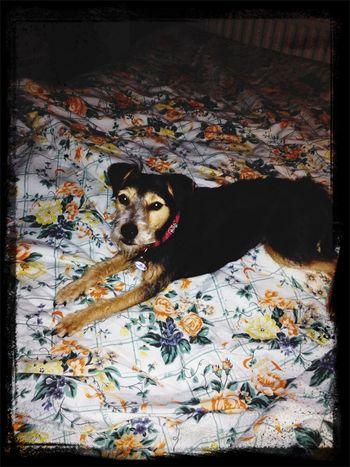 Mysweet Lovemydog Tierddog