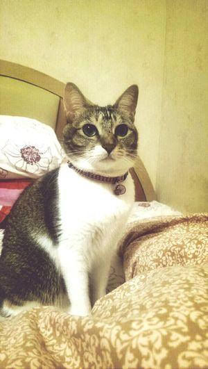 Cute Pets Cat♡ Cat Lovers Kitty Cat
