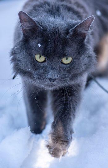 kitty Animal