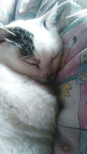 EyeEmNewHere Selah No People Close-up Day Miauuu 😺 Miau ♥  Miau :3
